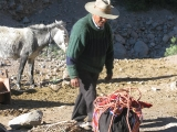 Mule drover