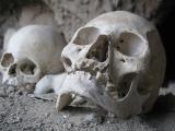 Skulls in ruin by campsite