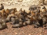 Seals on the Ballestas