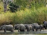 Elephants have the right of way/Jon Hanson