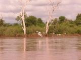 Egrets heading upstream/Martha Hut